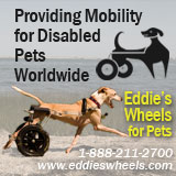 Eddie's Wheels