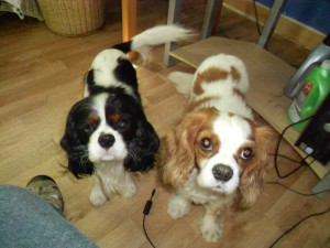 Jessie & Izzie, new & fabulous Lucky Star rescues!