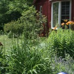 A summer garden at the Cottage