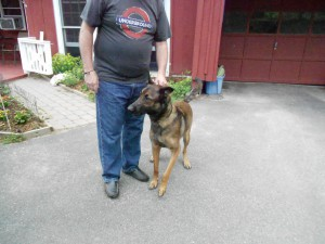 Brady, a magnificent Belgian Malinois, a 1st at the cottage!