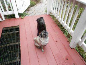 Miko & Saki, a delightful duo!