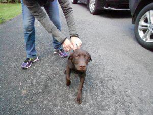 Cooper, a delightful puppy!