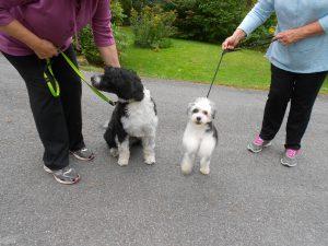 Bijou-frisbee fanatic and Daisy!