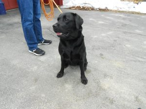 Meet Zoe - all of 90 lbs - a very sweet and strong young lady who spent Easter weekend at the cottage.