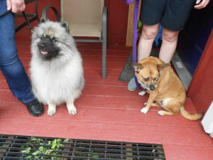 Keeshond Killian and Sato rescue Dottie (from Puerto Rico) enjoyed the amenities of the cottage for a couple of days. Both top notch guests!